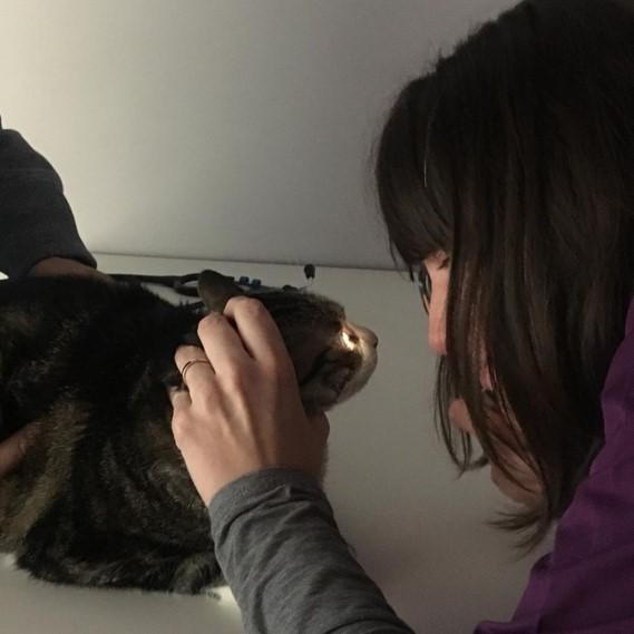 Consulta gatos 6
