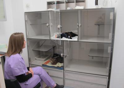 Hospitalización felina